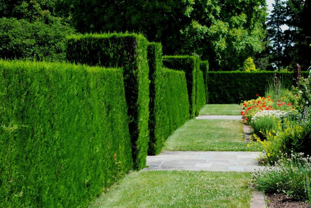 a green and healthy hedge