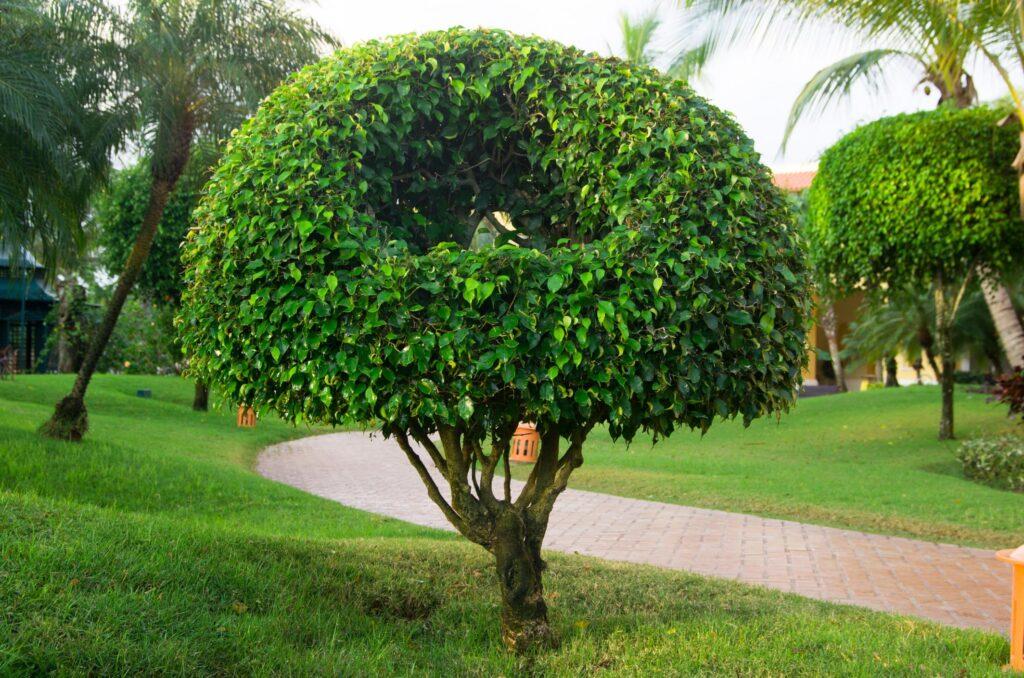 a shaped tree and plants